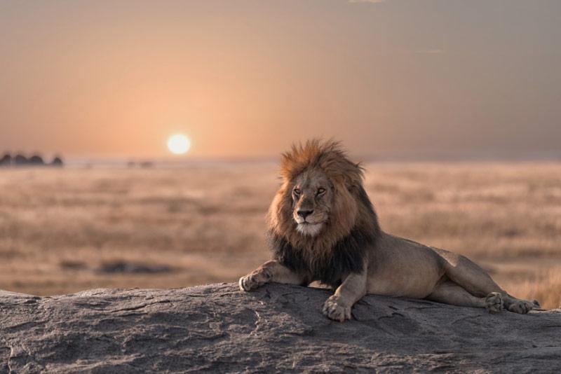 Tanzania salvaje -Viaje a Tanzania y Zanzíbar