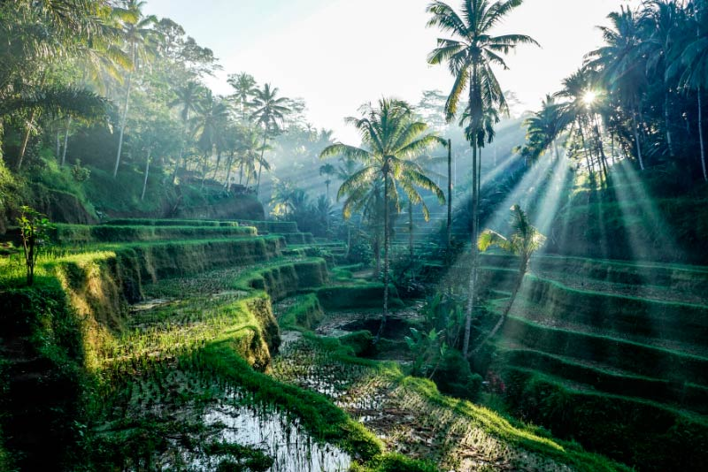 Viaje a Bali a medida