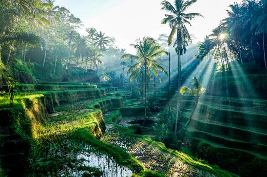bali-a-medida-terrazas-de-arroz-tegallalang