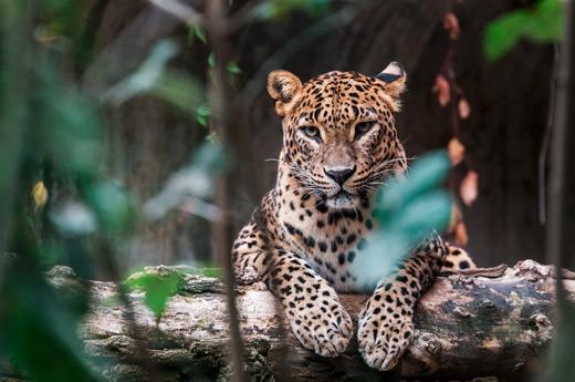 sri-lanka-saborea-cultura-yala-safari-1