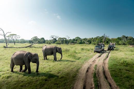 sri-lanka-saborea-cultura-yala-safari-2