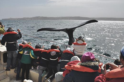 viaje-argentina-torres-paine-puerto-madryn-ballenas