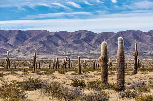 viaje-argentina-torres-paine-salta-parque-nacional-cardones
