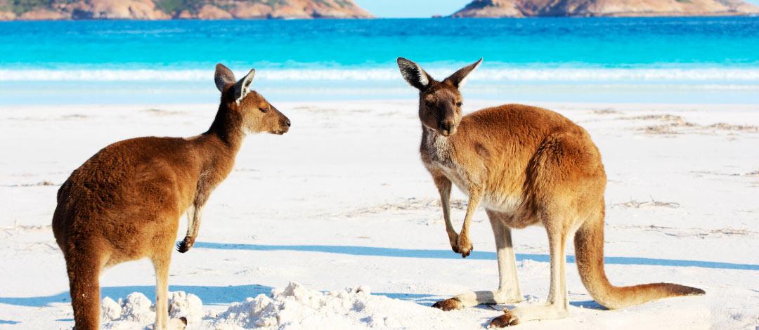 viaje-australia-personalizado-cabecera