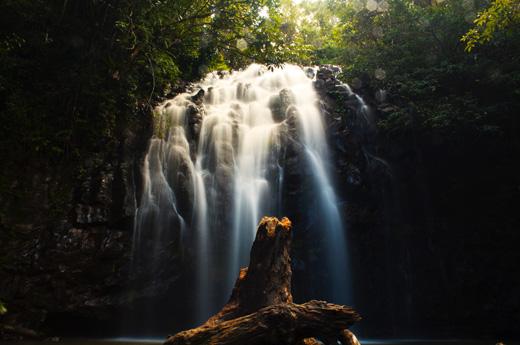 viaje-australia-personalizado-daintree-national-park