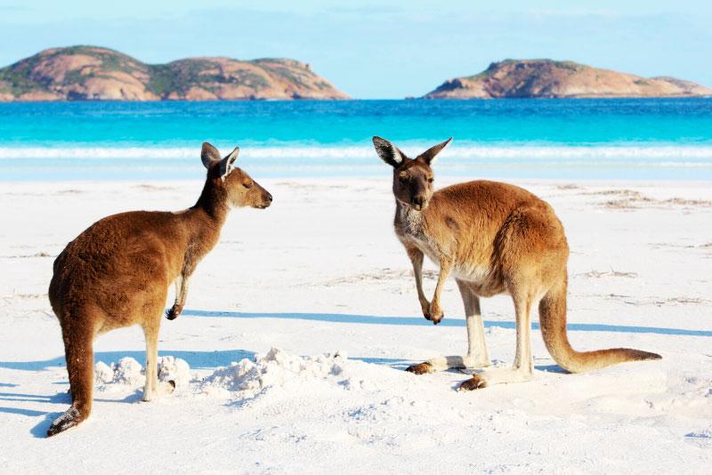 Viaje a Australia: única en su especie