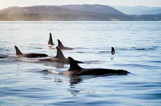 viaje-canada-este-avistamiento-ballenas