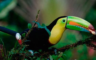 ¿Cuál es la mejor época para viajar a Costa Rica?
