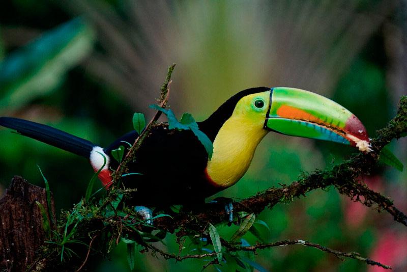 Viaje a Costa Rica – Colores Vivos