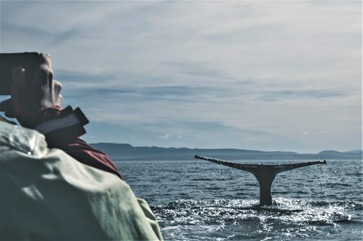 viaje-islandia-libre-avistamiento-ballenas