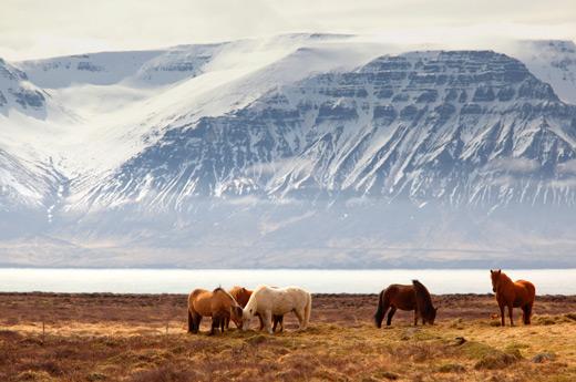 viaje-islandia-libre-zona-este-1