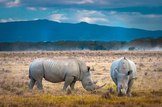 viaje-kenia-zanzibar-lago-nakuru