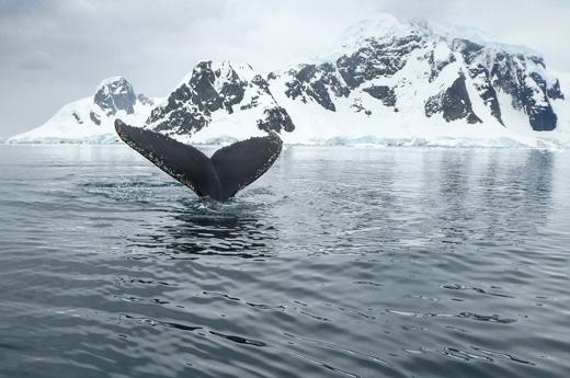 viaje-noruega-islas-lofoten-avistamiento-ballenas