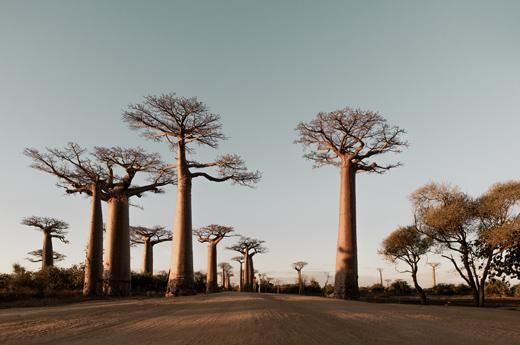 viaje-tanzania-zanzibar-tarangire