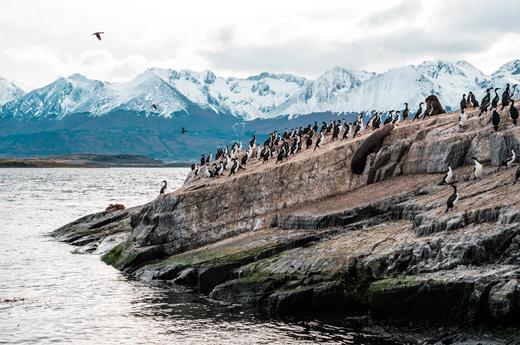 crucero-patagonia-islas-malvinas