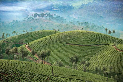 sri-lanka-familia-kegalle-plantaciones-te