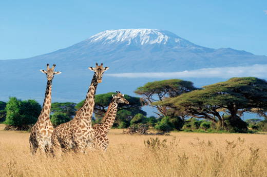 viaje-kenia-zanzibar