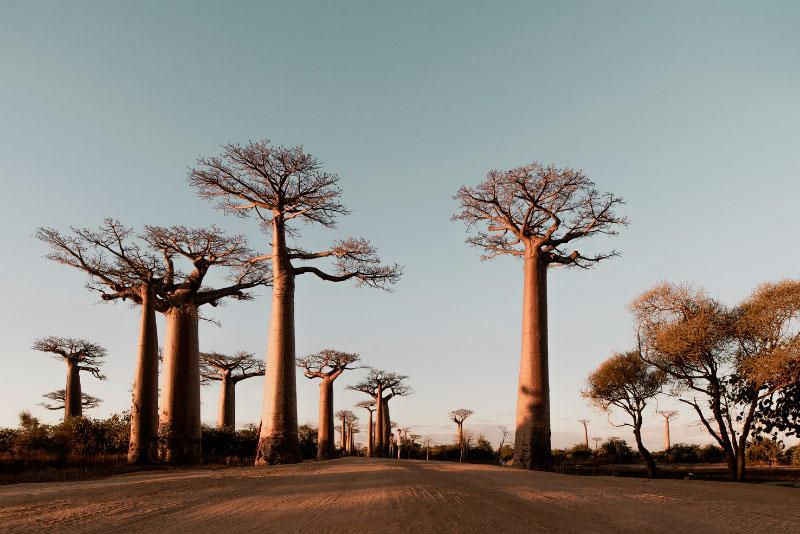 Viaje a Tanzania y Tanganyika