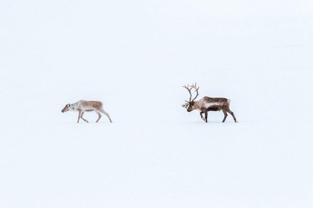 viajar a suecia este invierno covid