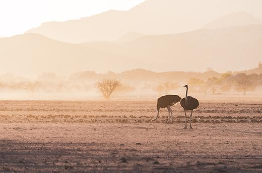 viaje luna de miel a namibia y maldivas