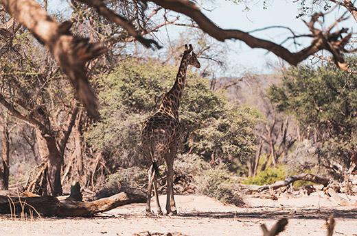 viaje a namibia de luna de miel